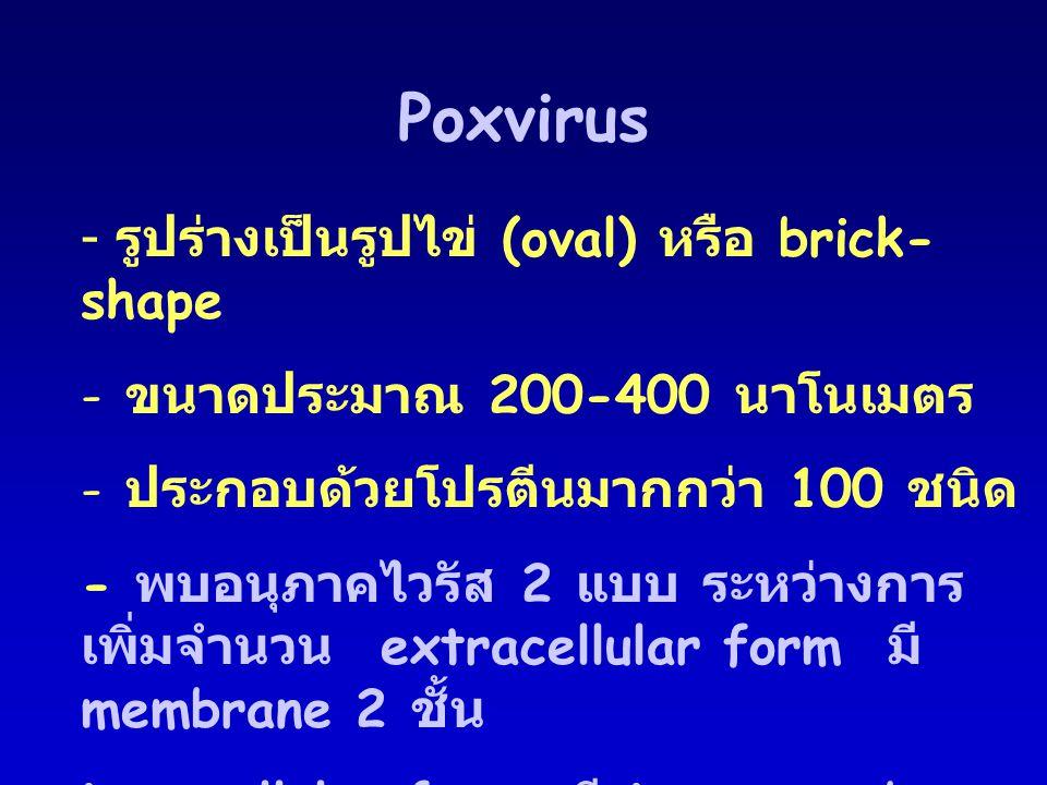 Poxvirus รูปร่างเป็นรูปไข่ (oval) หรือ brick-shape
