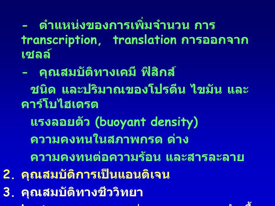 - ตำแหน่งของการเพิ่มจำนวน การ transcription,