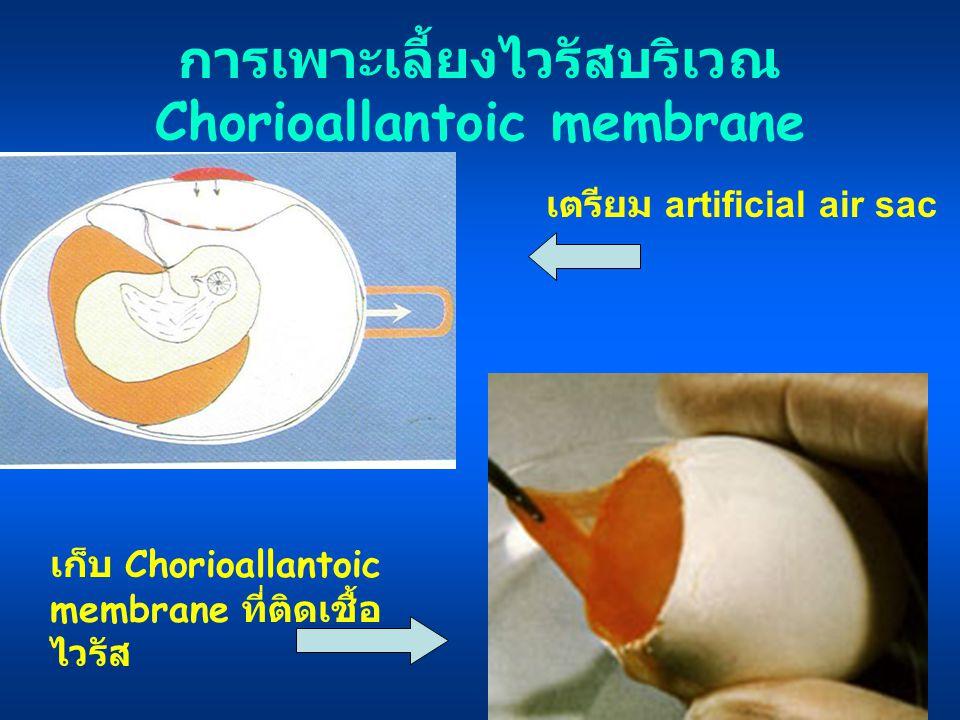 การเพาะเลี้ยงไวรัสบริเวณ Chorioallantoic membrane
