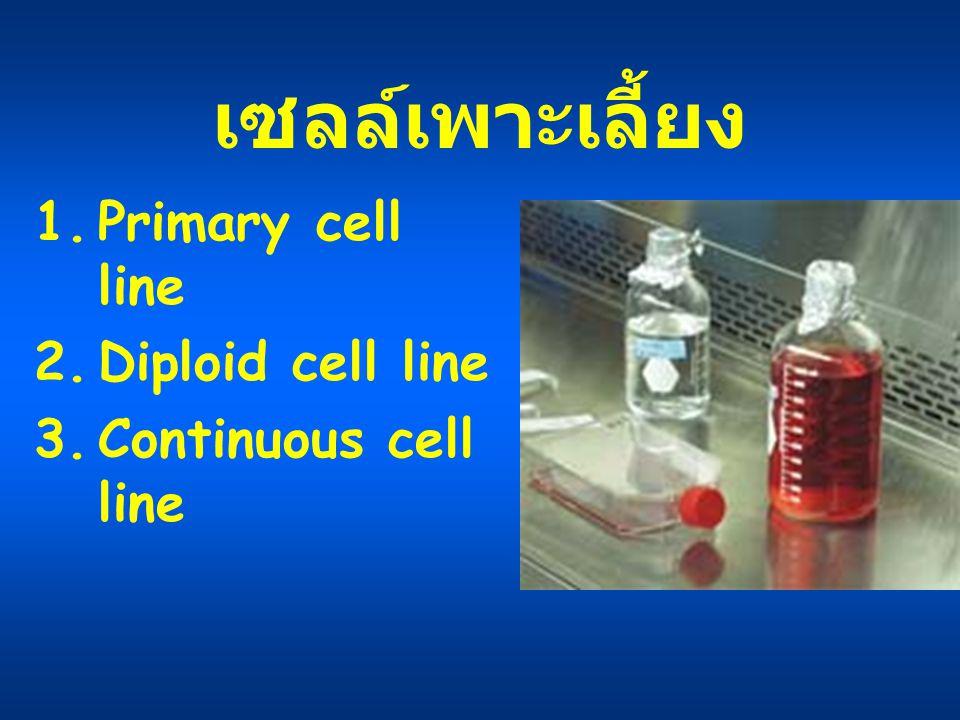 เซลล์เพาะเลี้ยง Primary cell line Diploid cell line