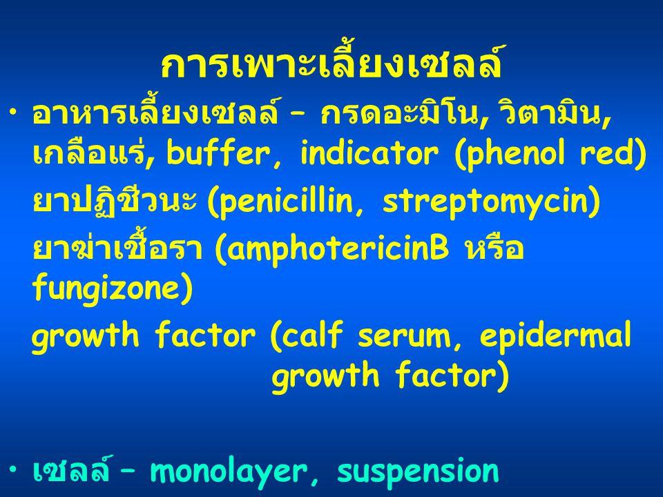 การเพาะเลี้ยงเซลล์ อาหารเลี้ยงเซลล์ – กรดอะมิโน, วิตามิน, เกลือแร่, buffer, indicator (phenol red) ยาปฏิชีวนะ (penicillin, streptomycin)