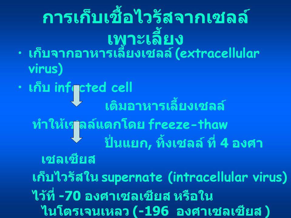 การเก็บเชื้อไวรัสจากเซลล์เพาะเลี้ยง