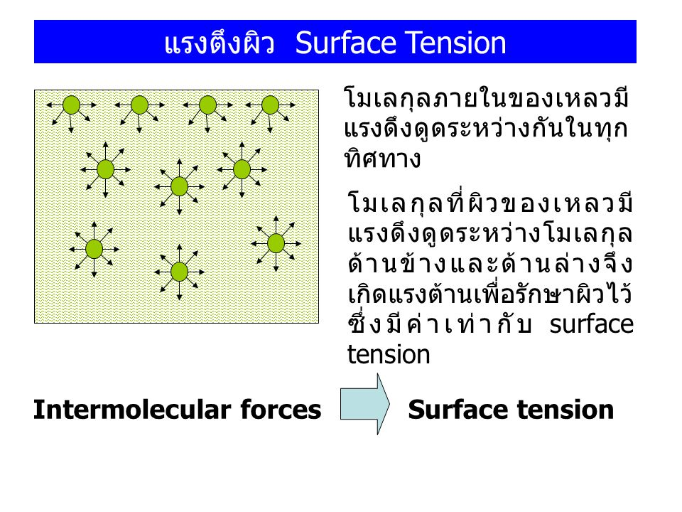 แรงตึงผิว Surface Tension