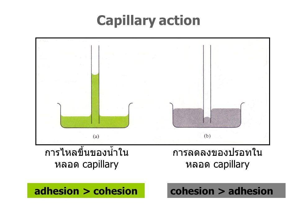 adhesion > cohesion