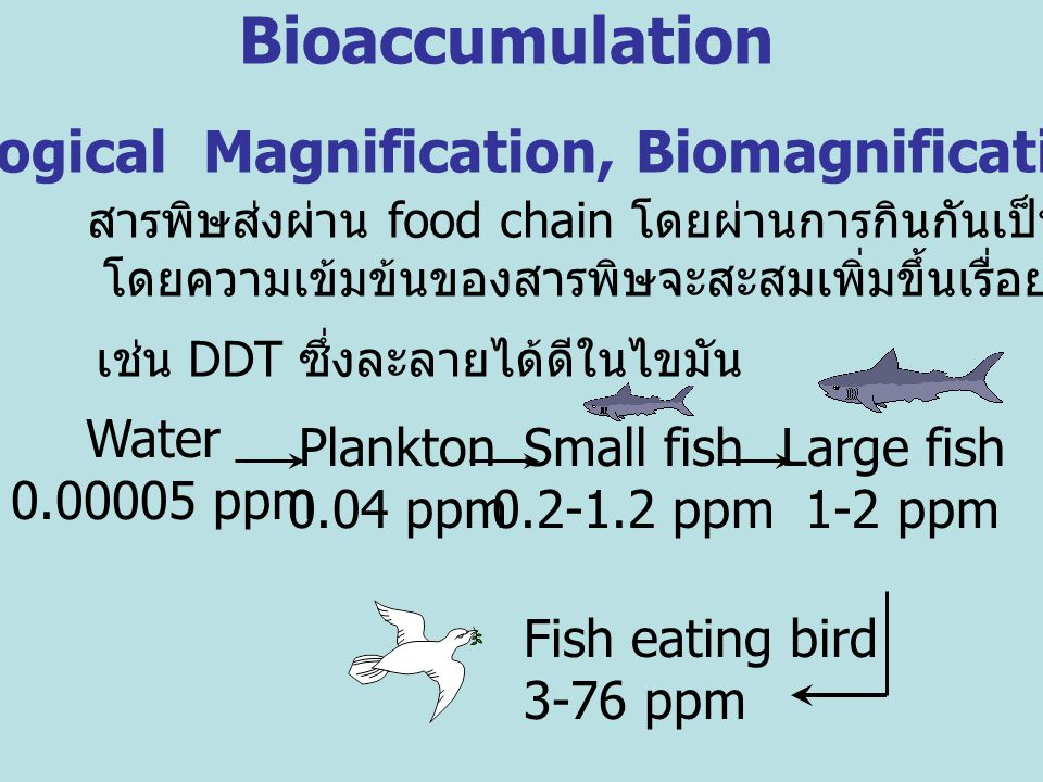 ( Biological Magnification, Biomagnification)