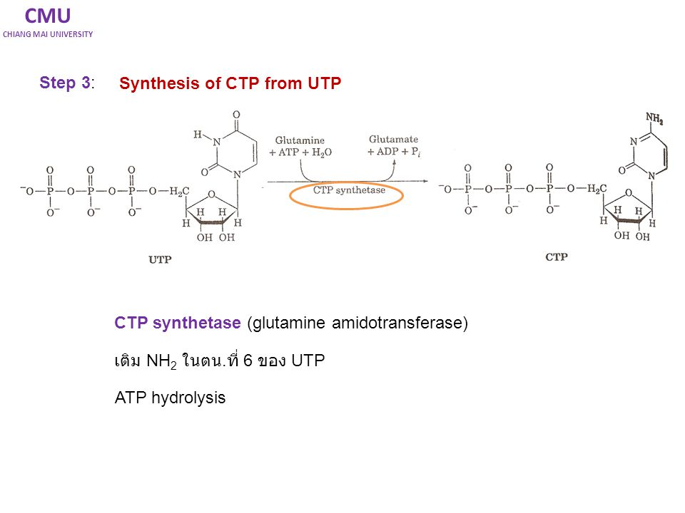 CMU Step 3: Synthesis of CTP from UTP