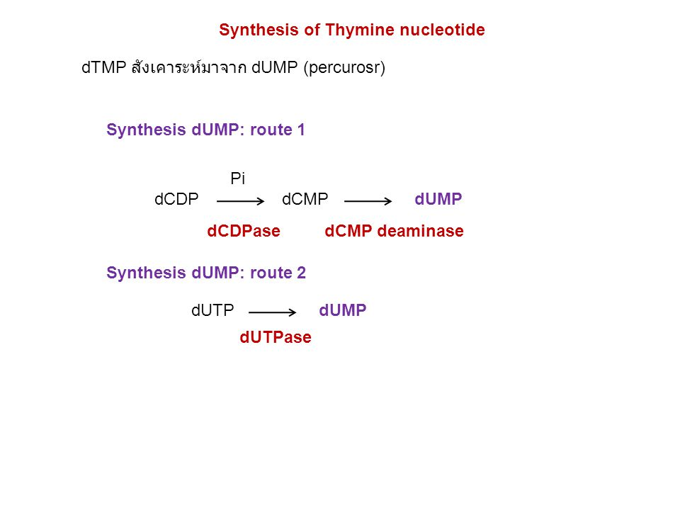 Synthesis of Thymine nucleotide