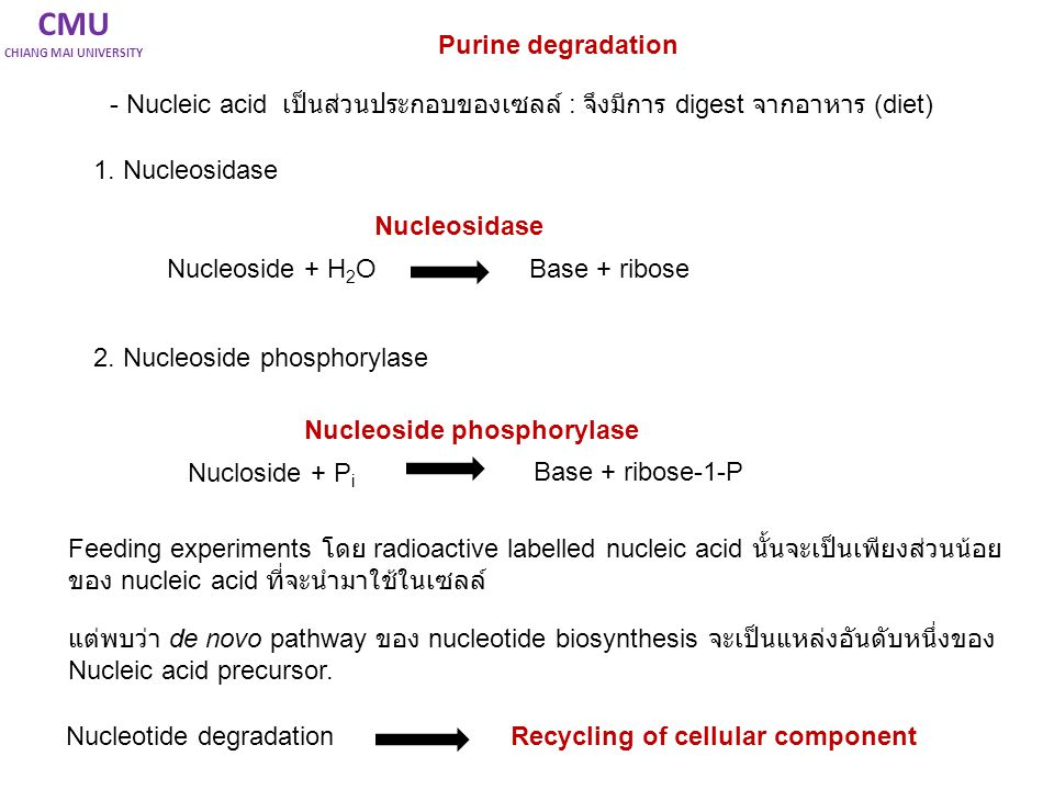 CMU Purine degradation