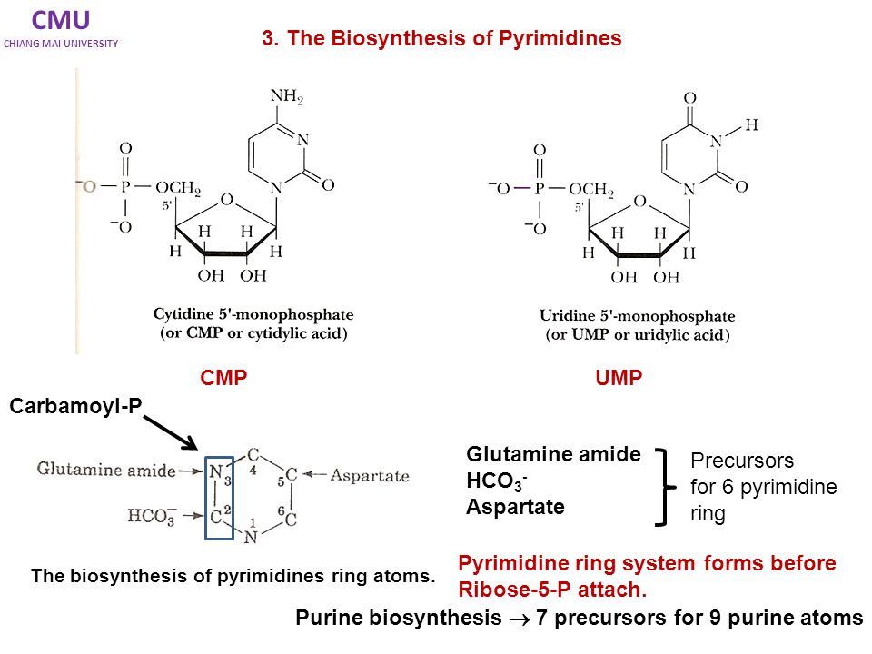 CMU 3. The Biosynthesis of Pyrimidines CMP UMP Carbamoyl-P