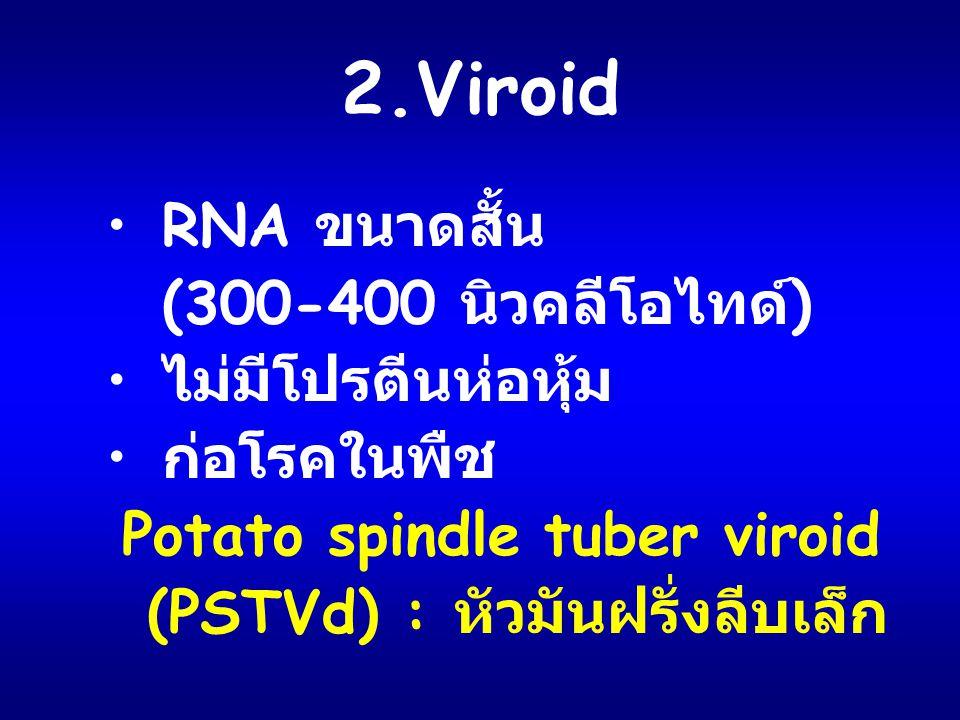 2.Viroid RNA ขนาดสั้น (300-400 นิวคลีโอไทด์) ไม่มีโปรตีนห่อหุ้ม
