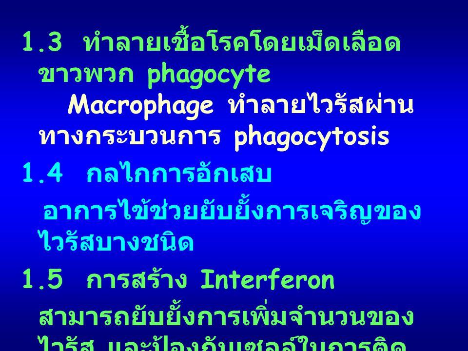 1. 3 ทำลายเชื้อโรคโดยเม็ดเลือดขาวพวก phagocyte