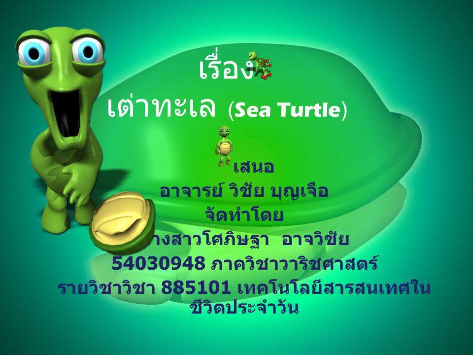 เรื่อง เต่าทะเล (Sea Turtle)