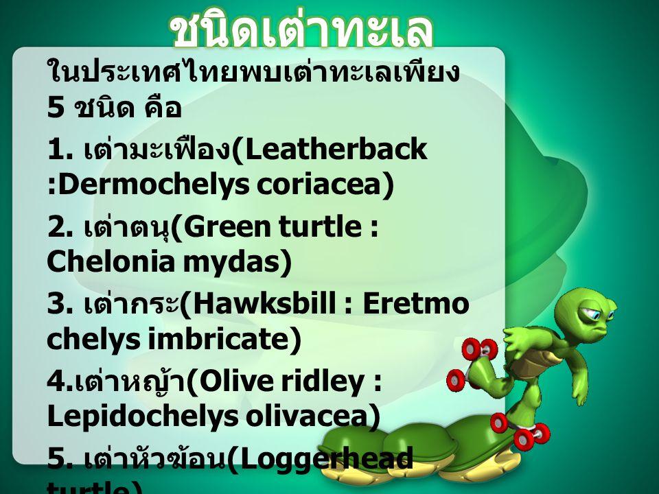 ชนิดเต่าทะเล ในประเทศไทยพบเต่าทะเลเพียง 5 ชนิด คือ
