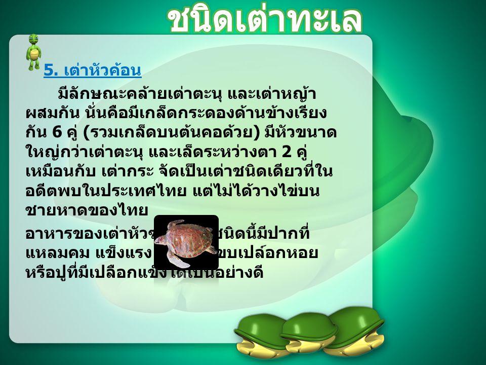 ชนิดเต่าทะเล 5. เต่าหัวค้อน