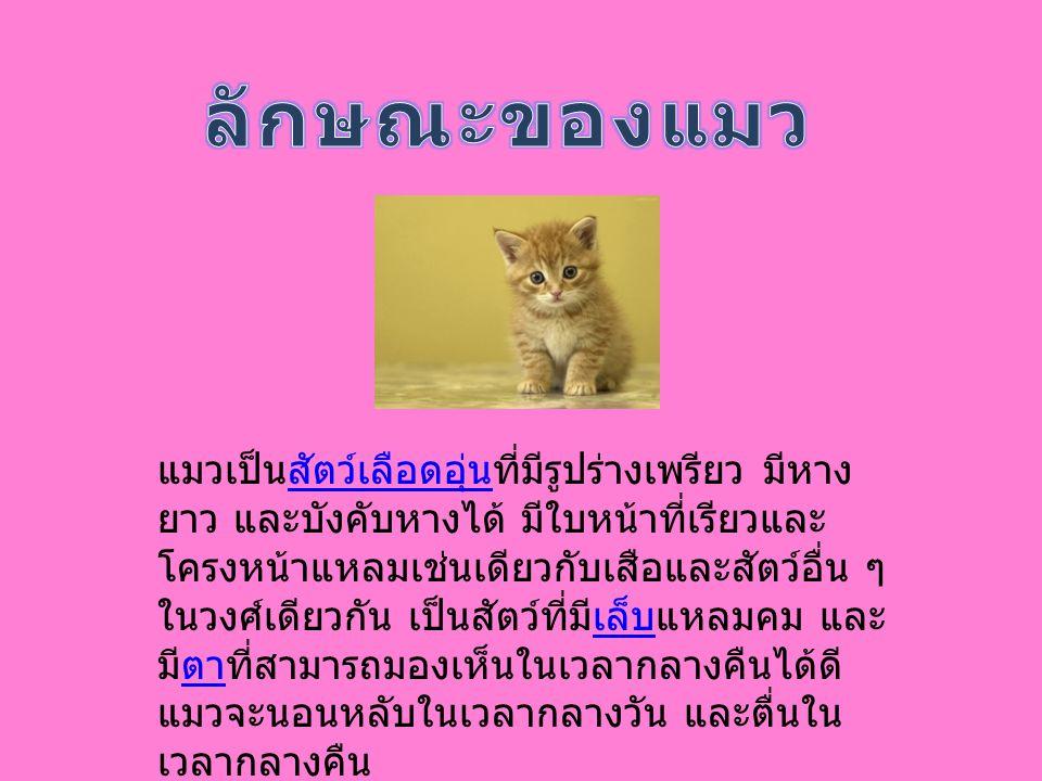 ลักษณะของแมว