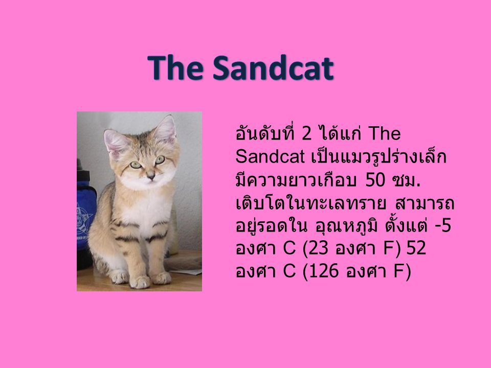 The Sandcat
