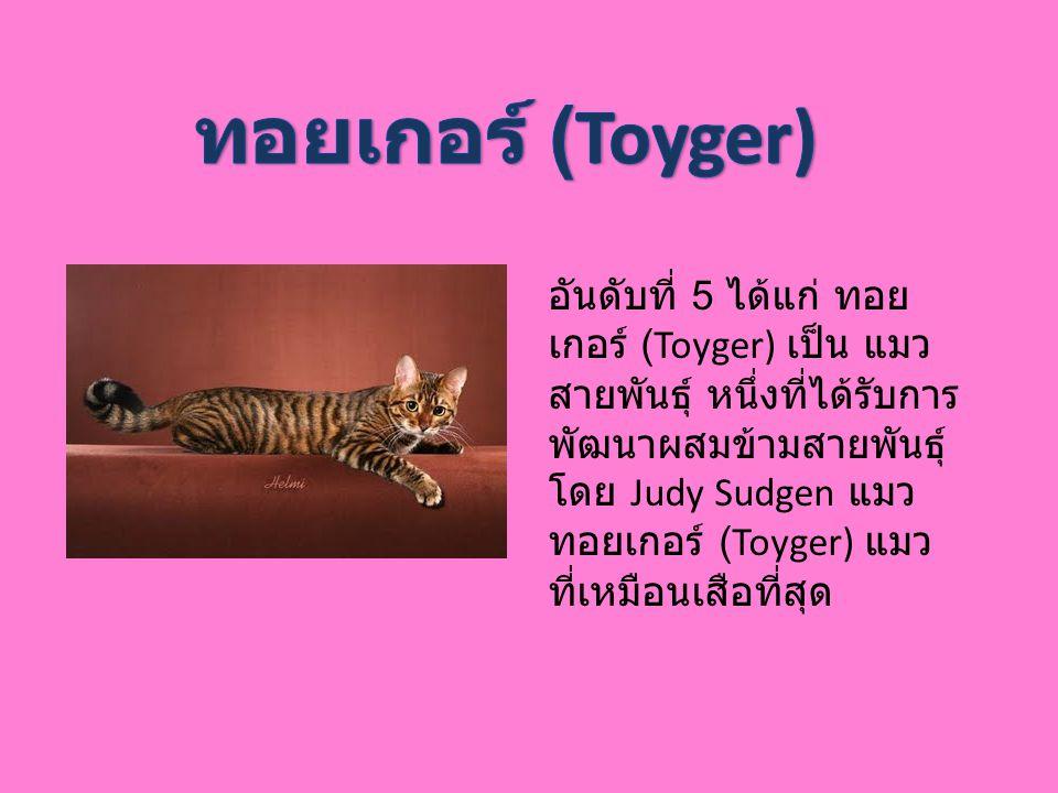 ทอยเกอร์ (Toyger)