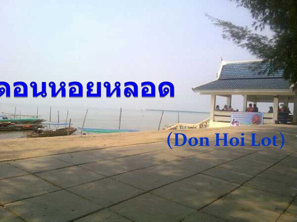 ดอนหอยหลอด (Don Hoi Lot)