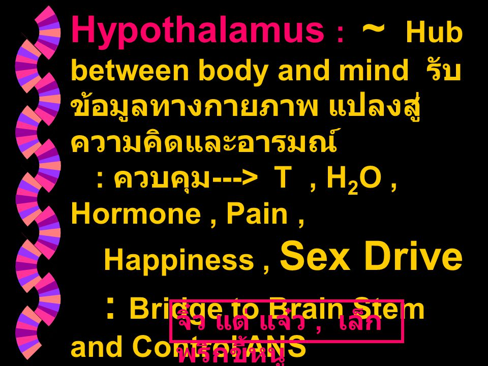 Hypothalamus : ~ Hub between body and mind รับข้อมูลทางกายภาพ แปลงสู่ความคิดและอารมณ์ : ควบคุม---> T , H2O , Hormone , Pain , Happiness , Sex Drive : Bridge to Brain Stem and Control ANS Function