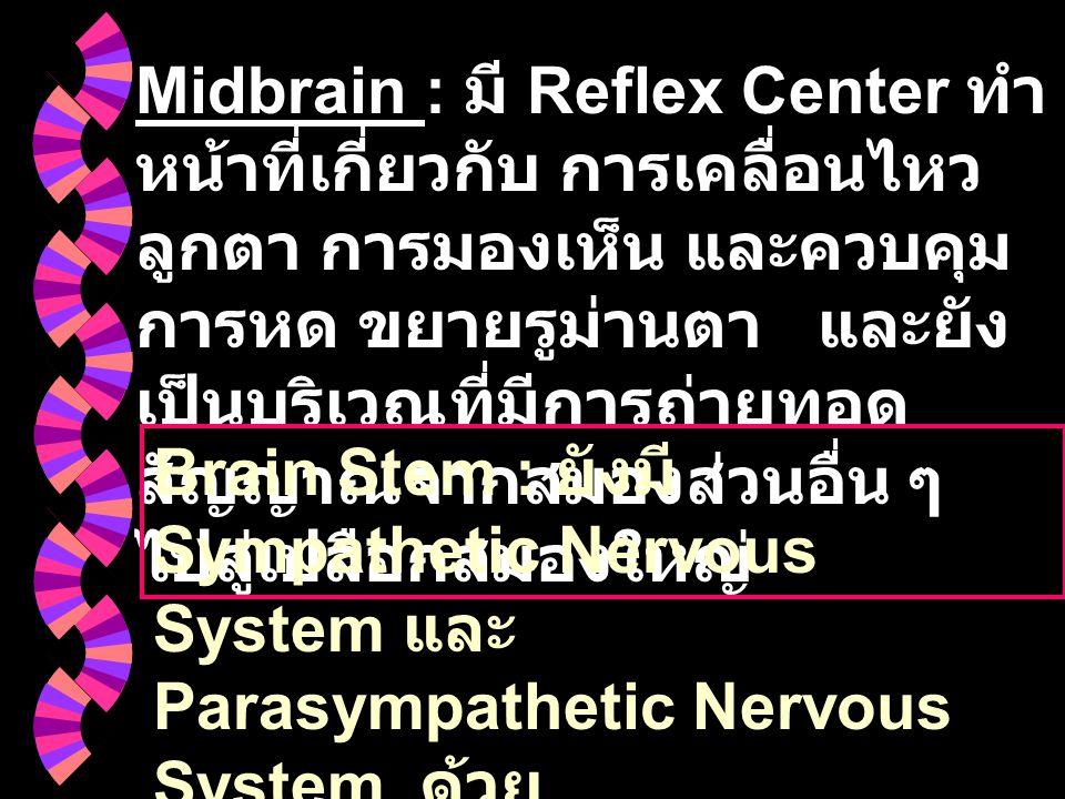 Midbrain : มี Reflex Center ทำหน้าที่เกี่ยวกับ การเคลื่อนไหวลูกตา การมองเห็น และควบคุมการหด ขยายรูม่านตา และยังเป็นบริเวณที่มีการถ่ายทอดสัญญาณจากสมองส่วนอื่น ๆ ไปสู่เปลือกสมองใหญ่