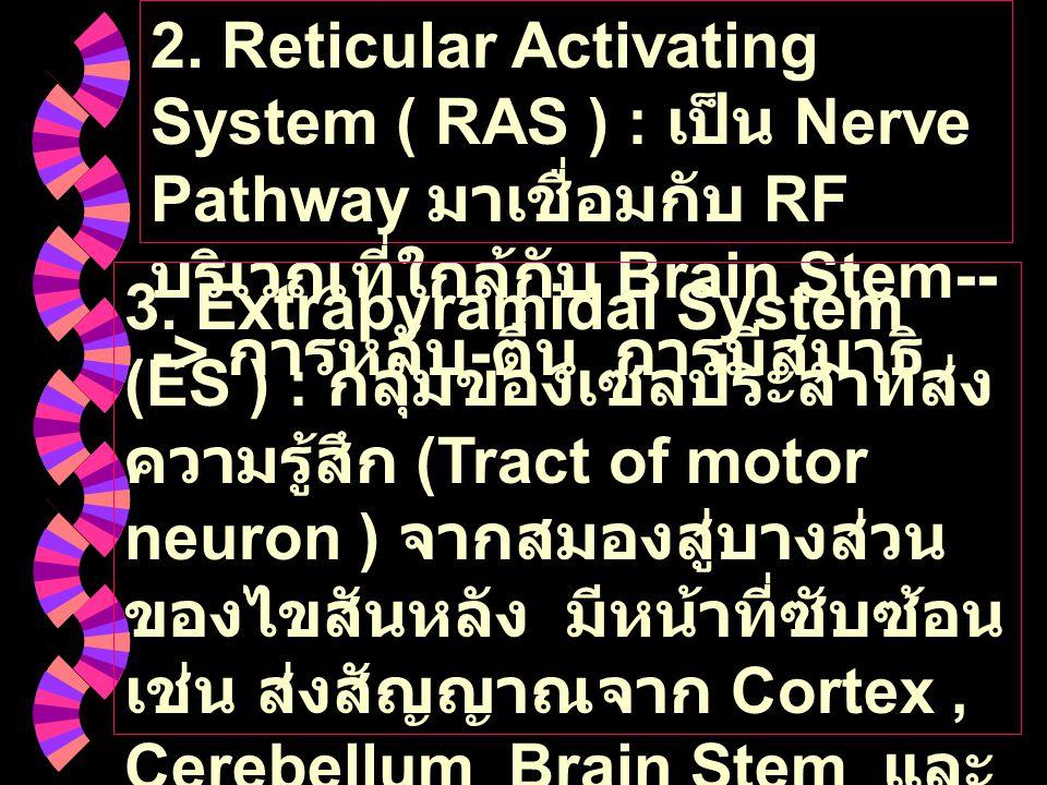 2. Reticular Activating System ( RAS ) : เป็น Nerve Pathway มาเชื่อมกับ RF บริเวณที่ใกล้กับ Brain Stem---> การหลับ-ตื่น การมีสมาธิ