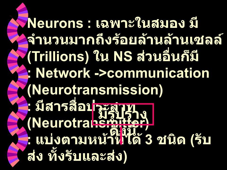 Neurons : เฉพาะในสมอง มีจำนวนมากถึงร้อยล้านล้านเซลล์ (Trillions) ใน NS ส่วนอื่นก็มี : Network ->communication (Neurotransmission) : มีสารสื่อประสาท (Neurotransmitter) : แบ่งตามหน้าที่ได้ 3 ชนิด (รับ ส่ง ทั้งรับและส่ง)