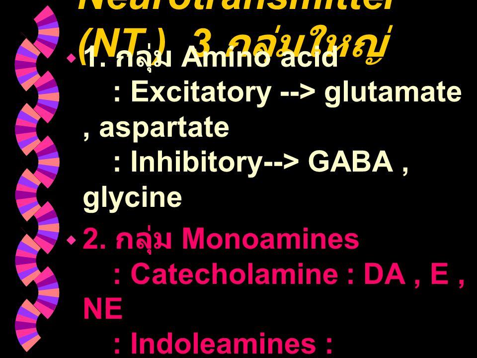 Neurotransmitter (NT ) 3 กลุ่มใหญ่
