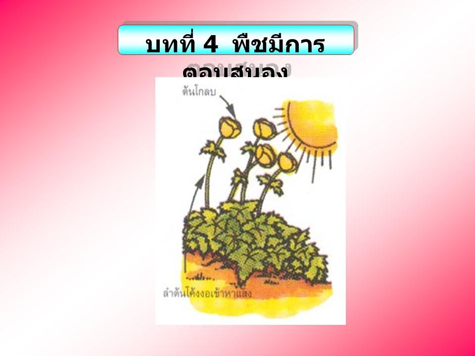บทที่ 4 พืชมีการตอบสนอง