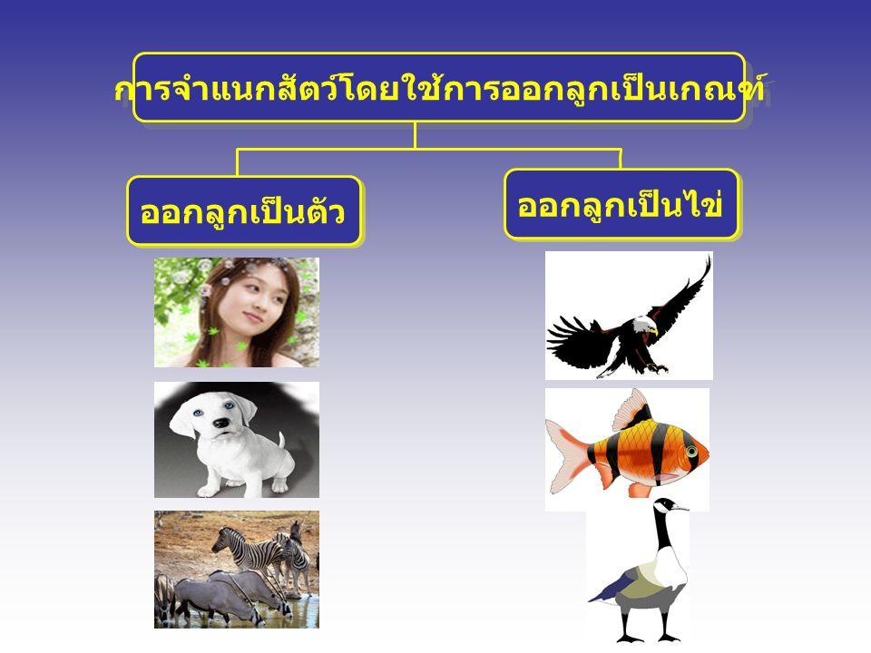 การจำแนกสัตว์โดยใช้การออกลูกเป็นเกณฑ์
