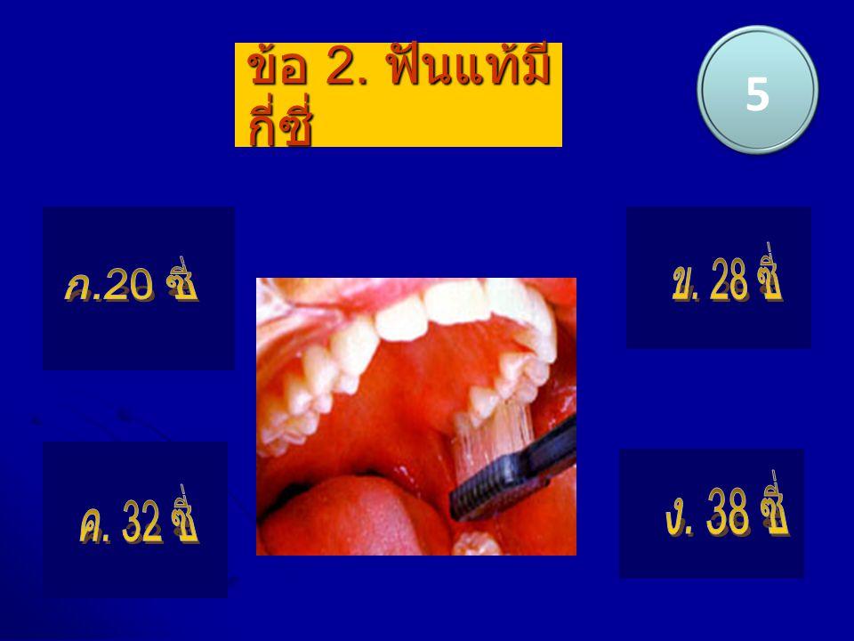5 ข้อ 2. ฟันแท้มีกี่ซี่ ข. 28 ซี่ ก.20 ซี่ ง. 38 ซี่ ค. 32 ซี่