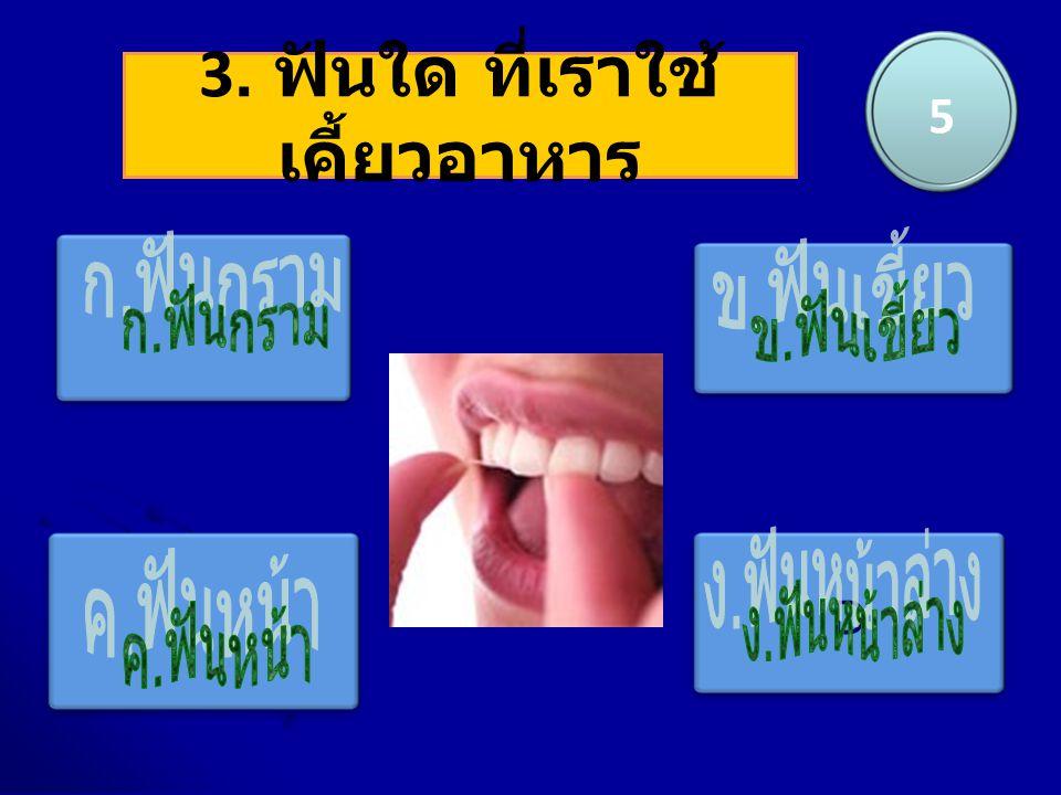 3. ฟันใด ที่เราใช้เคี้ยวอาหาร