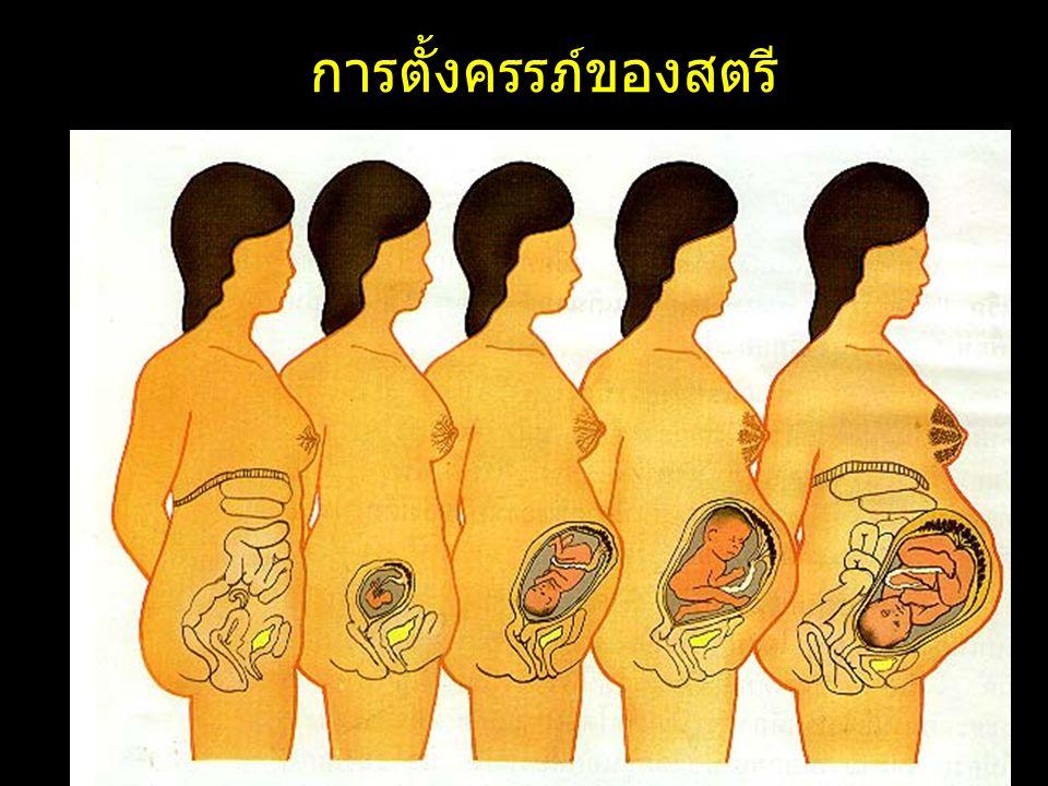 การตั้งครรภ์ของสตรี