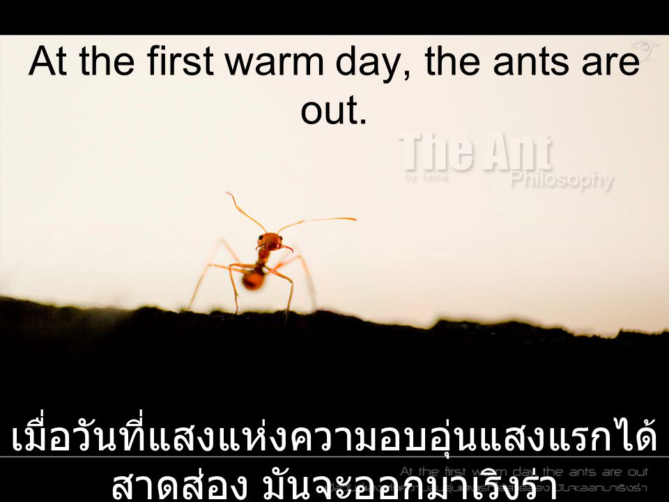 At the first warm day, the ants are out.