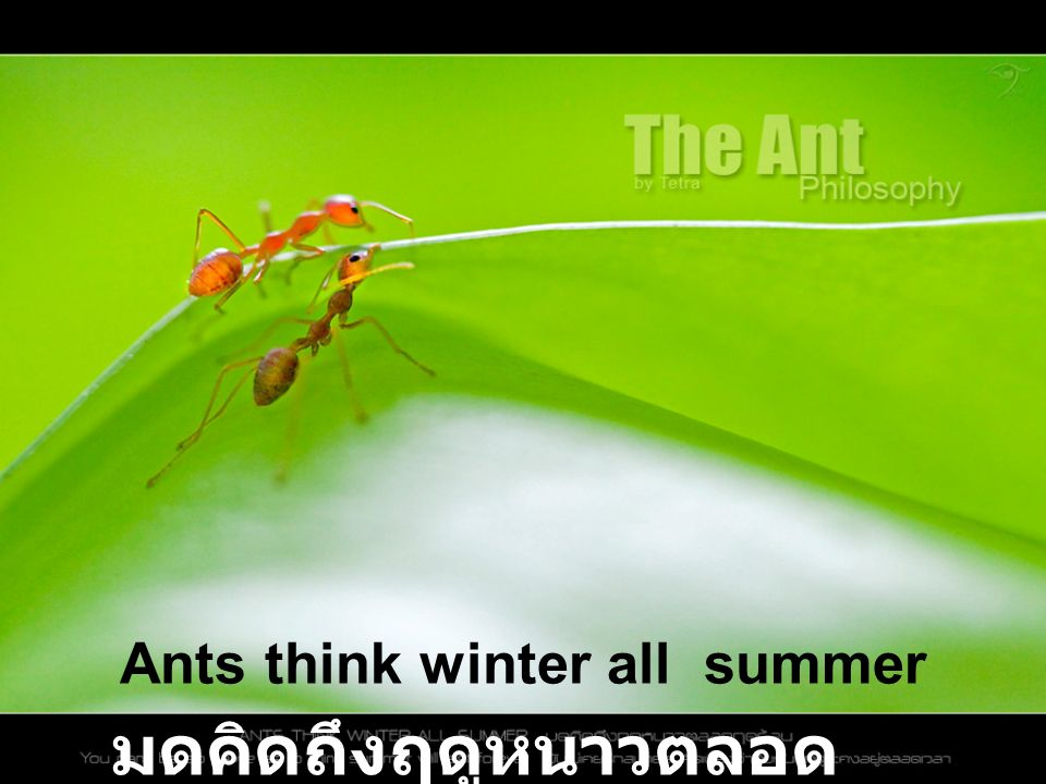 Ants think winter all summer