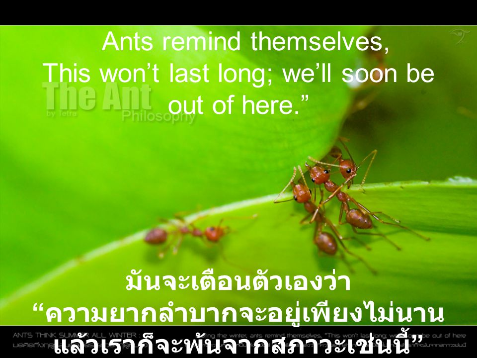 Ants remind themselves, This won't last long; we'll soon be out of here.
