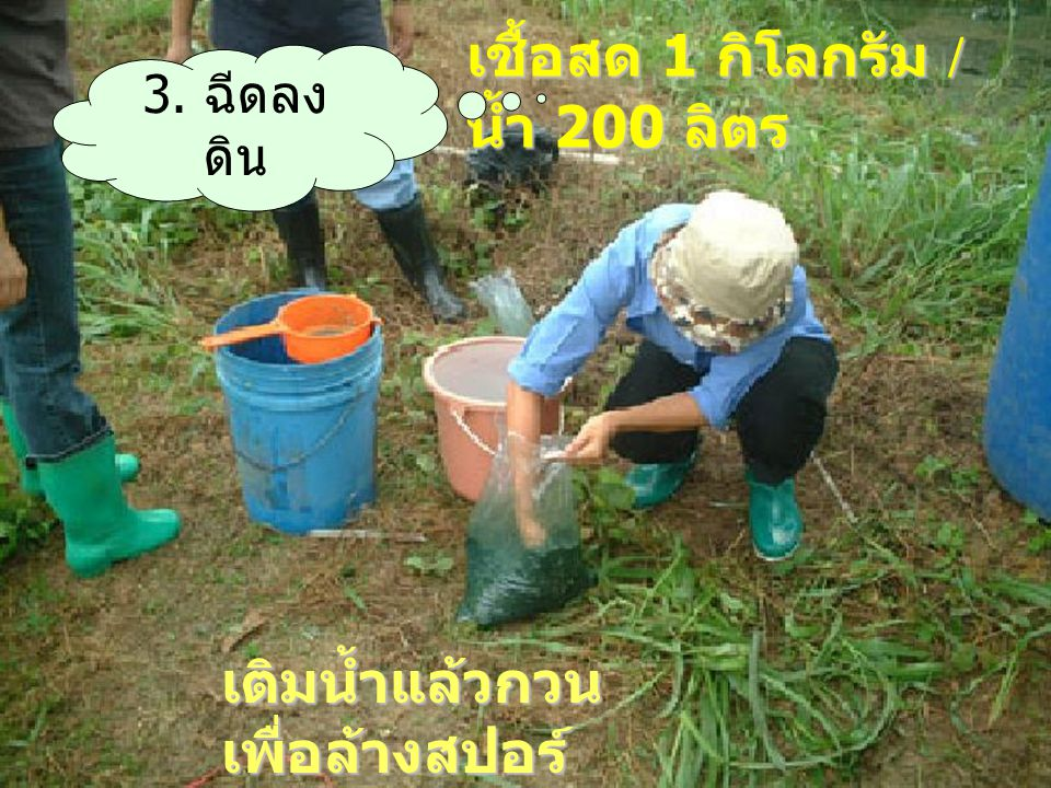 เชื้อสด 1 กิโลกรัม / น้ำ 200 ลิตร