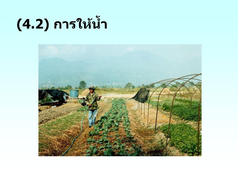 (4.2) การให้น้ำ