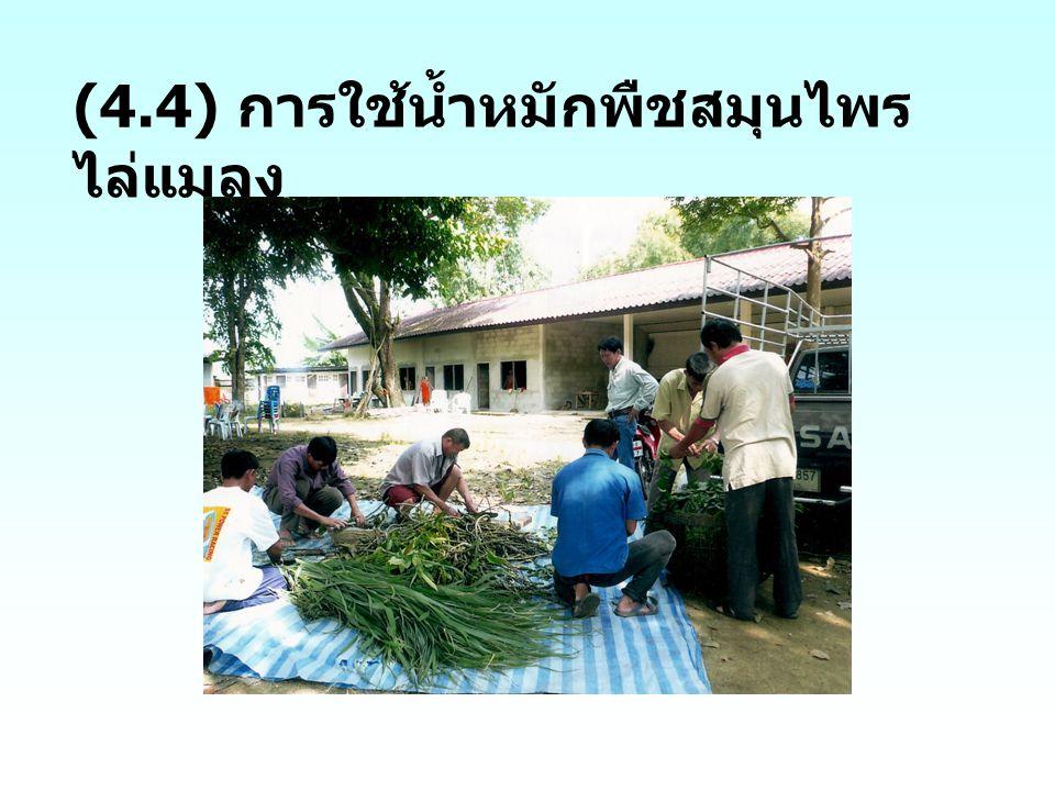 (4.4) การใช้น้ำหมักพืชสมุนไพรไล่แมลง