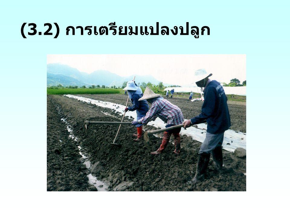 (3.2) การเตรียมแปลงปลูก