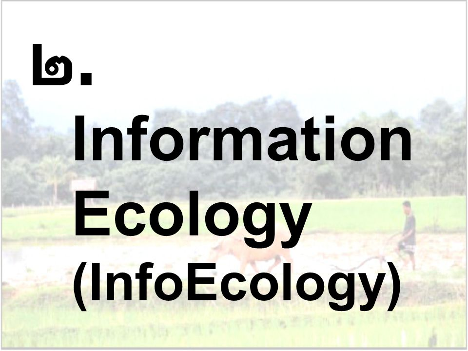 Information Ecology (InfoEcology)