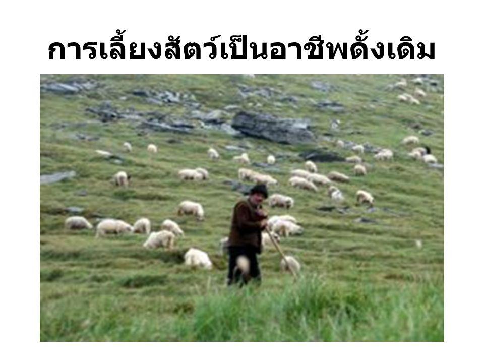 การเลี้ยงสัตว์เป็นอาชีพดั้งเดิม