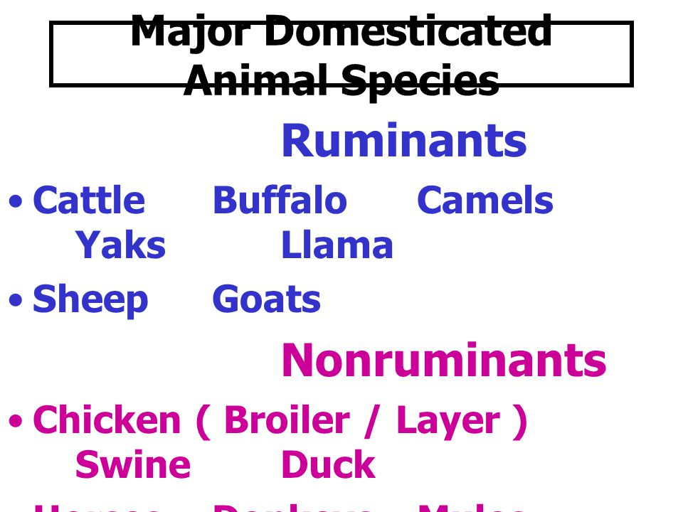 Major Domesticated Animal Species