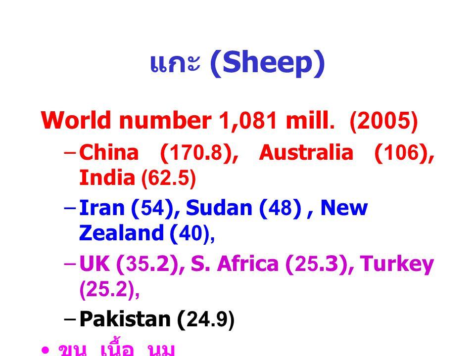 แกะ (Sheep) World number 1,081 mill. (2005)