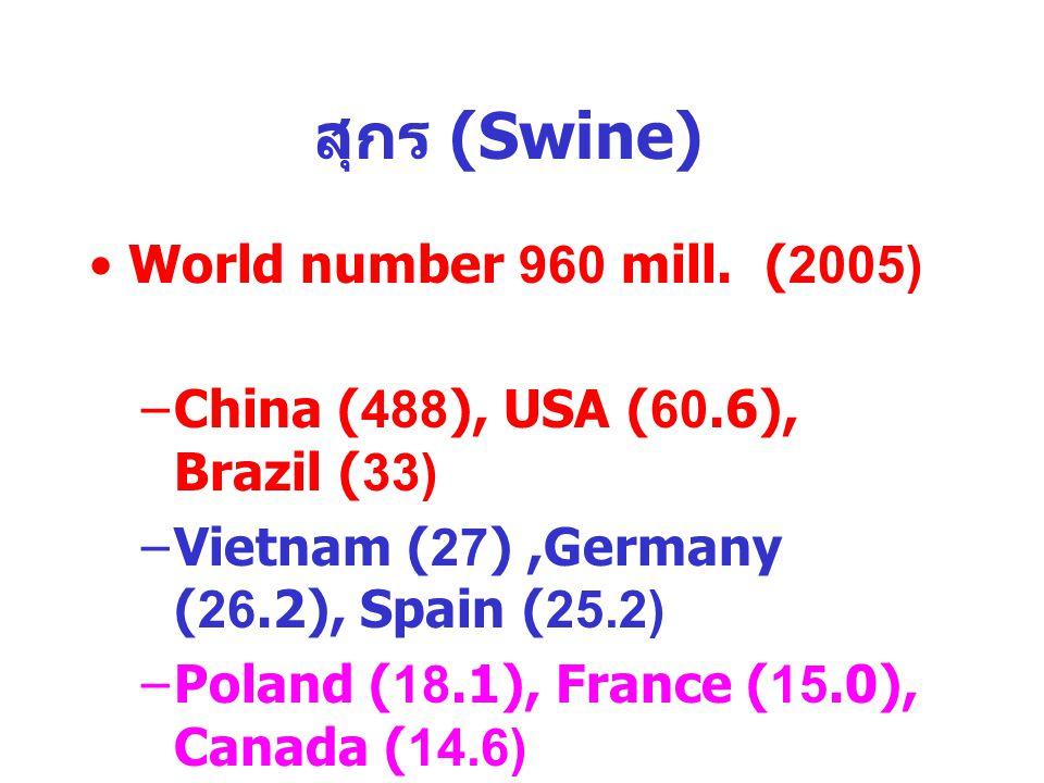 สุกร (Swine) เนื้อ World number 960 mill. (2005)