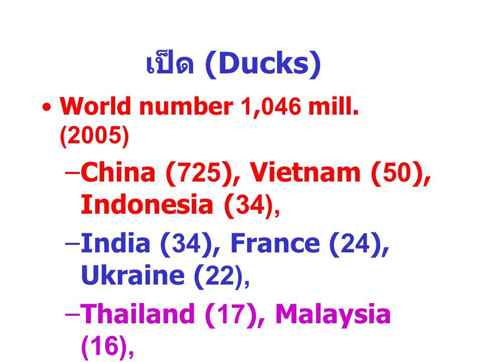 เป็ด (Ducks) China (725), Vietnam (50), Indonesia (34),
