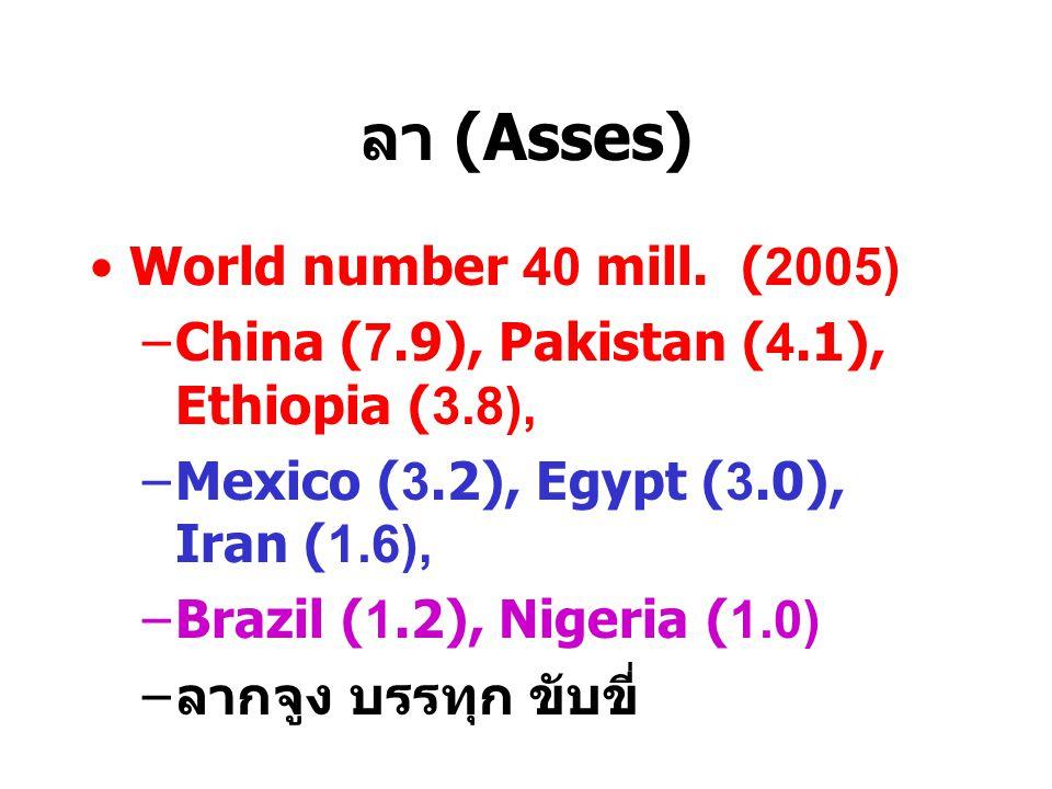 ลา (Asses) World number 40 mill. (2005)