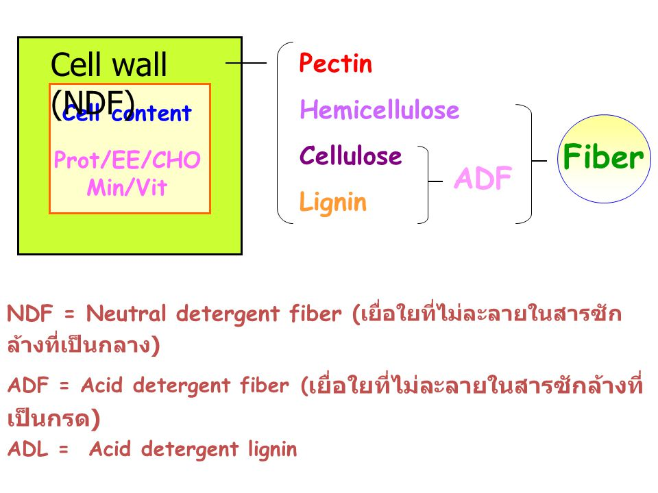 Pectin Hemicellulose. Cellulose. Lignin. Cell wall (NDF) Cell content. Fiber. Prot/EE/CHO. Min/Vit.