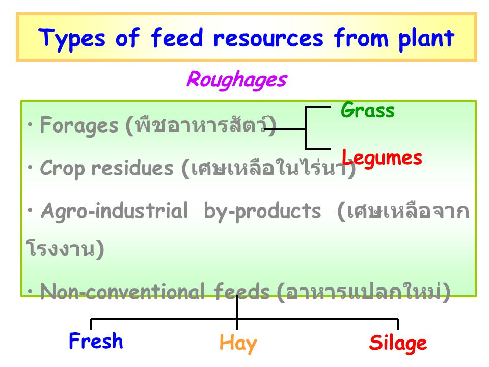 Types of feed resources from plant
