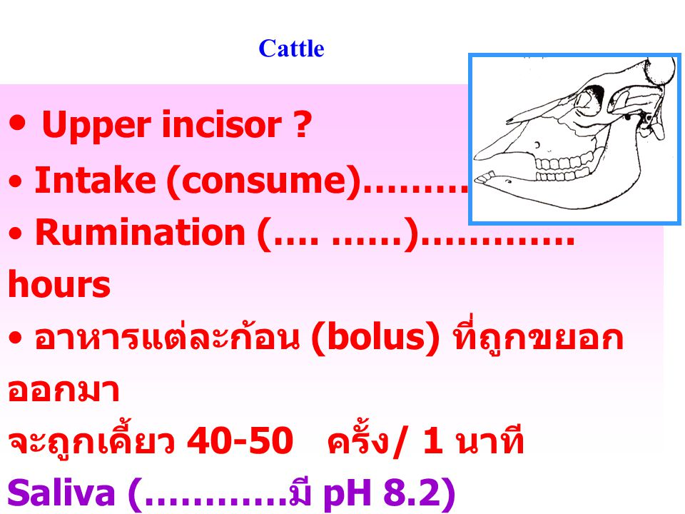 Upper incisor Intake (consume)………. hours
