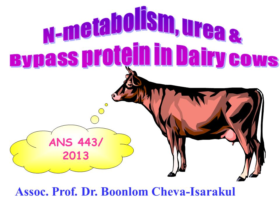 Bypass protein in Dairy cows